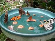 22-How to Attract Butterfly Activity...
